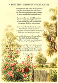 Country Rhymes poetry -  - A Rose that grows in the Country